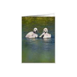 Cute Baby Swans Birthday Wishes Card