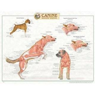 Canine Muscular Anatomy Chart: Explore similar items