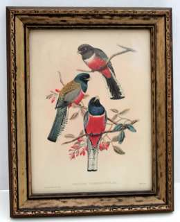 BIRD GLASS WOOD FRAME PRINT J. GOULD & W. HART 1800s