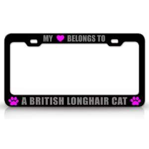 MY HEART BELONGS TO A BRITISH LONGHAIR Cat Pet Auto License Plate