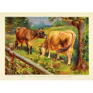 1925 Print Jersey Cow Dairy Channel Island Animals Herd Cattle Breed E