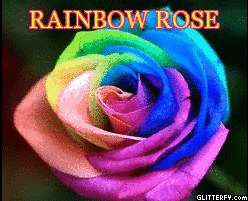 15 Rainbow Happy Rose Seeds,Perennials