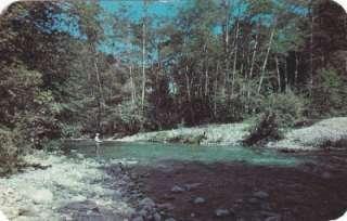 1953 Redwood Lodge & Camp Big Sur, CA Vintage Postcard |