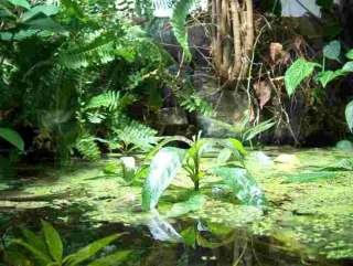 Sie bieten auf ein Einrichtungsset für ein tropisches Paludarium