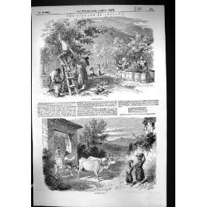Grape Gathering France Cart Bullock Wine Making: Home & Kitchen